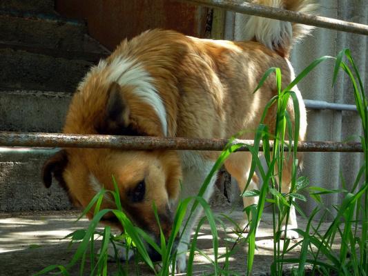 Травинки-былинки и Рыжик