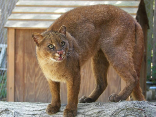 Как называется это животное?