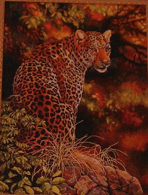 Взгляд леопарда.