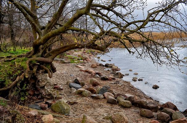 Балтийский берег.