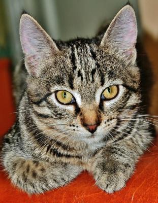1-марта , Международный день кошек !