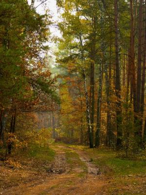 """""""Рыжая осень, как хитрая бестия,  Прячет в листве золотистые нити"""""""