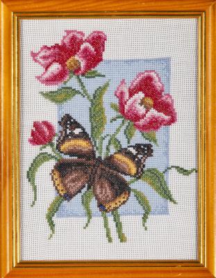 Бабочка Адмирал.