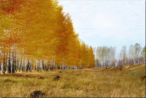 осень золотая1