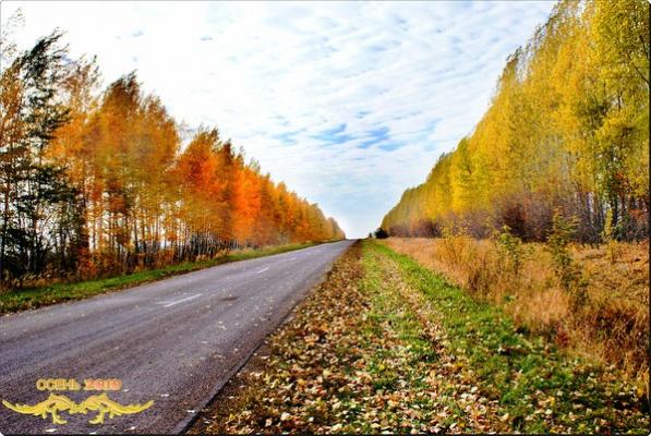 осень золотая3