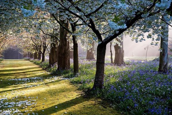 Сад Maple Glen в Новой Зеландии