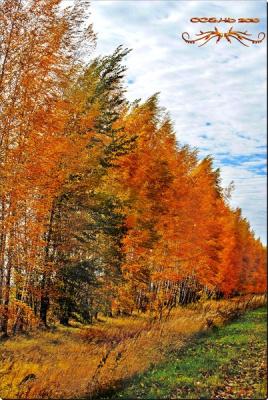 осень золотая2