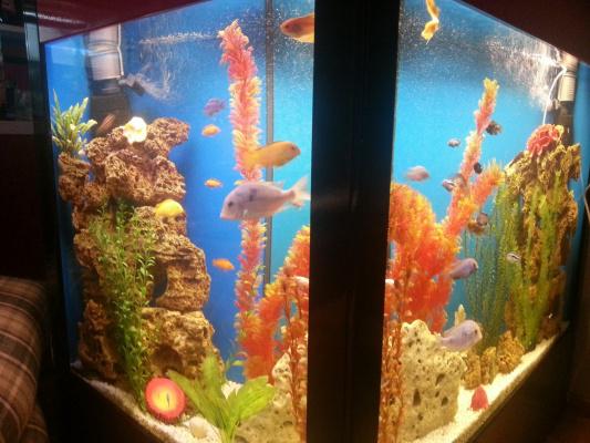 Риби 6