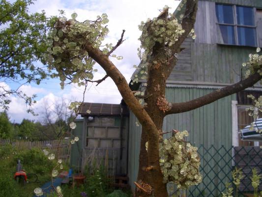 Вторая жизнь суъого дерева