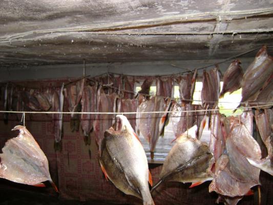 сушка рыбки.