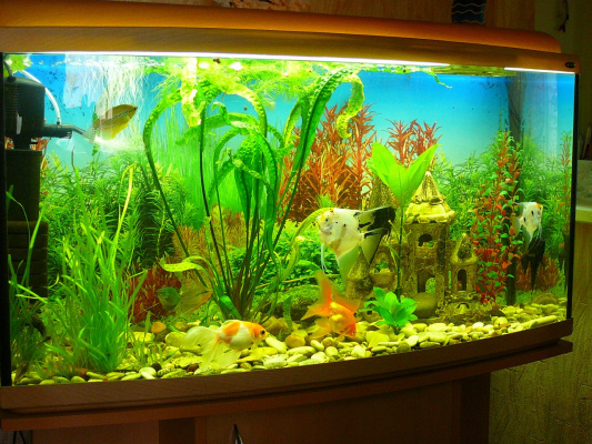 Мой аквариум!