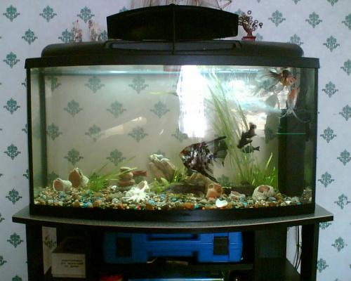 Мой аквариум