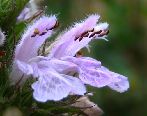 Орхидеи)))
