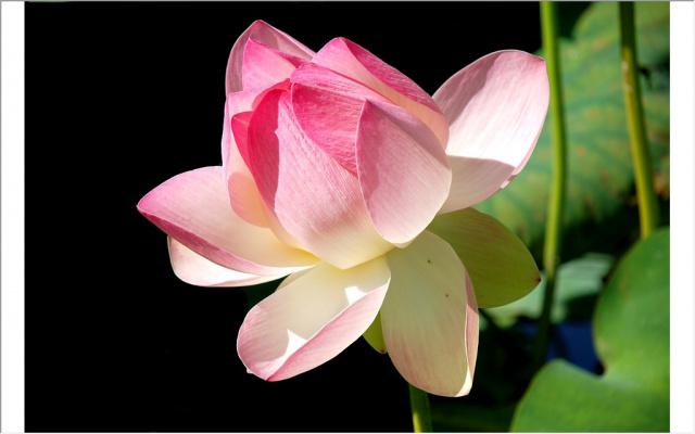 Нежный цветочек