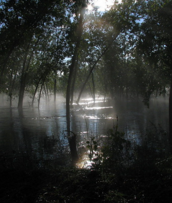тайна леса