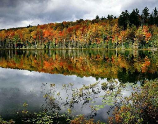 Осень рыжая