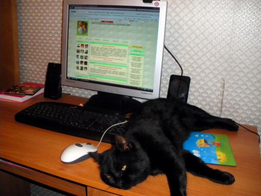 Доцент отдыхает после работы в интернете