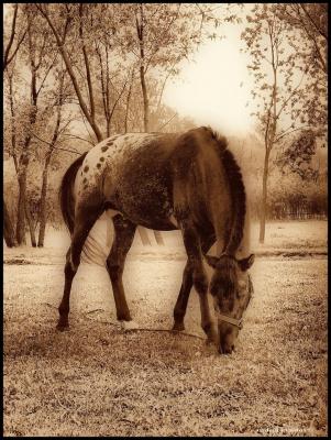 Сказочный конь...