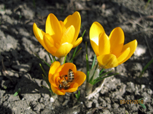 первый мёд