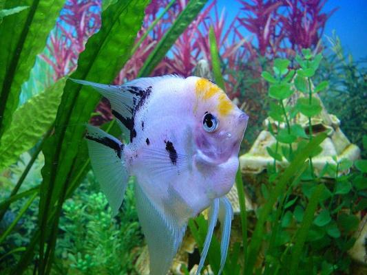Гроза аквариума