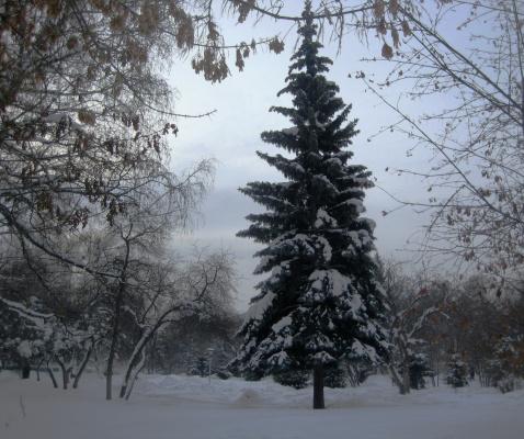 Снежная красавица