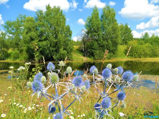 Лето голубое .