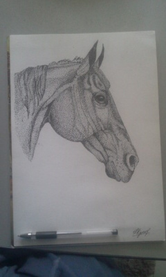 Голова лошади.