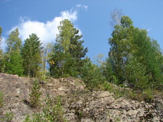И на камнях растут деревья... -2