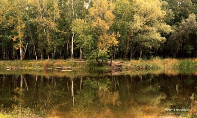 Осенью у пруда.