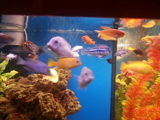 Риби 3
