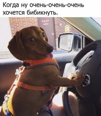 _OisHvdYUxQ