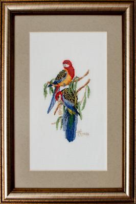 «Разноцветные попугаи»
