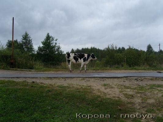 Корова - глобус.