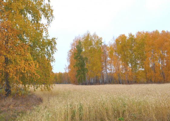 Осень 072