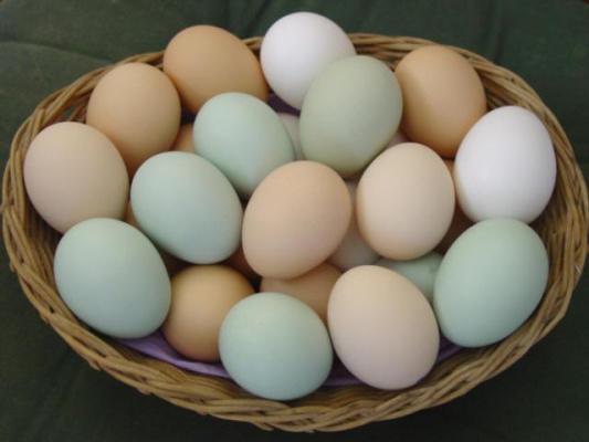 Полезные продукты: свежие куриные яйца