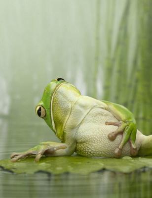 Зелёный  лягуш
