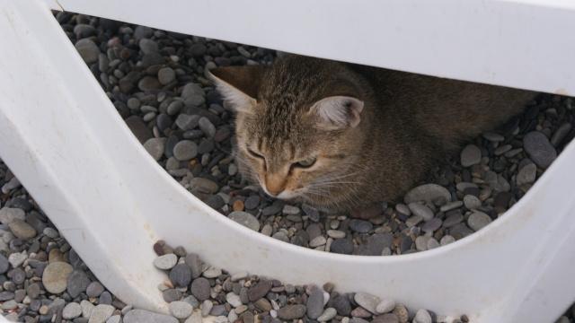 пляжный кот