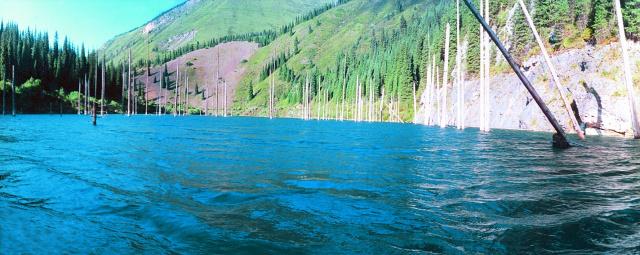 Затопленный лес на озере Каинды