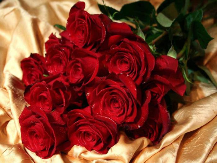 Фото самая красивая цветы розы