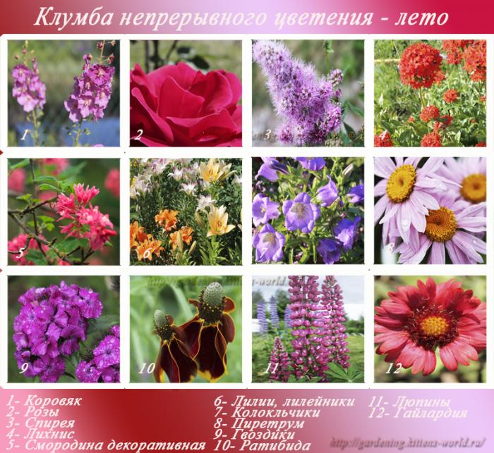 Перечень садовых цветов