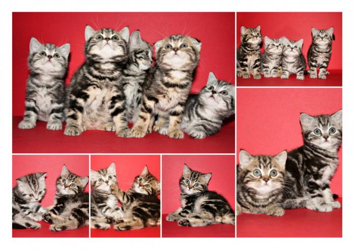 http cats xbubs ru biserdan-narsalar-yasash html
