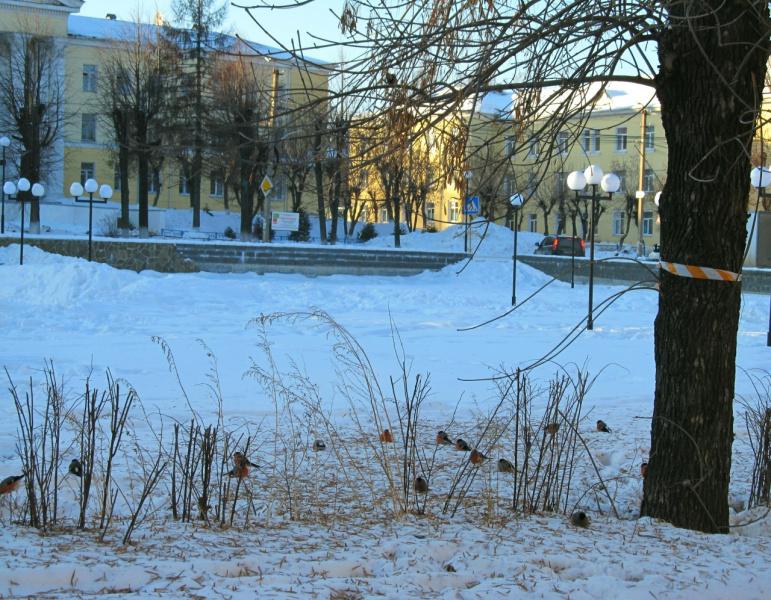 Летом здесь цветник, зимой - снегиревник!