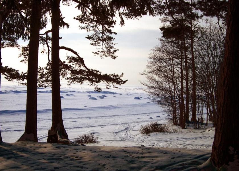 20 фвраля09 берег Финского залива.