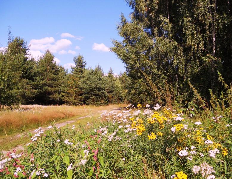 Цветущее лето