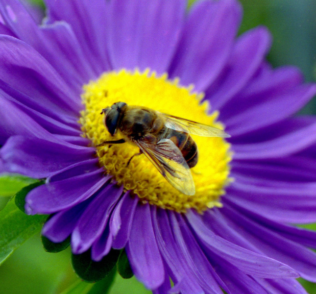 На цветке