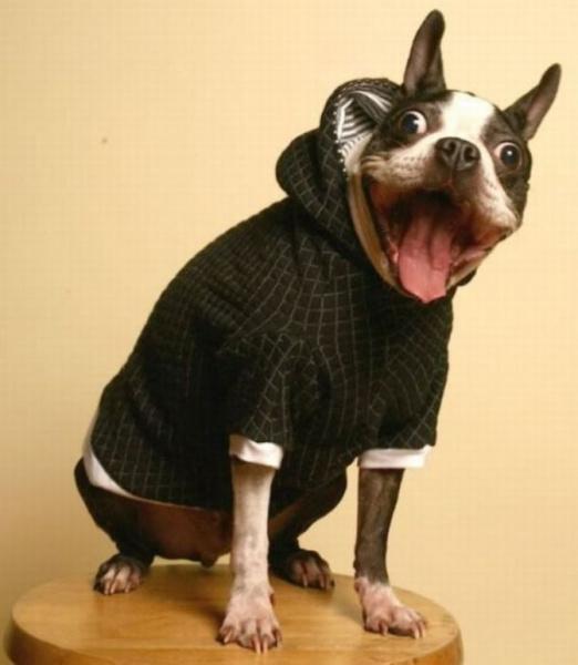 смешной пес