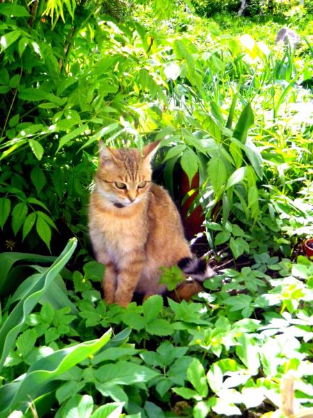 Кошка Кнопа под Астиблой....