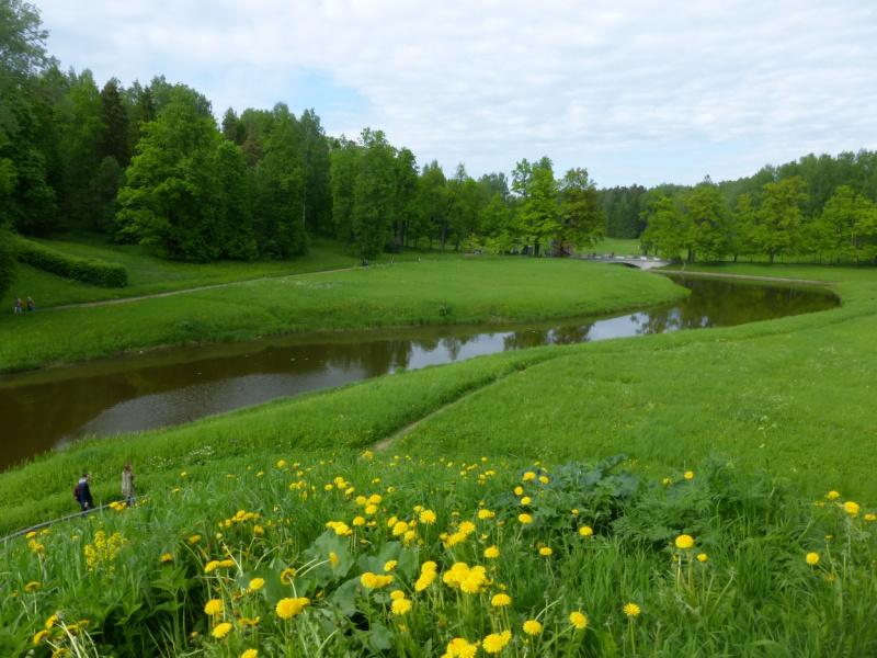 Славянка в начале лета