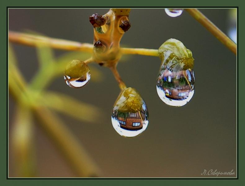 Дождевые карусели