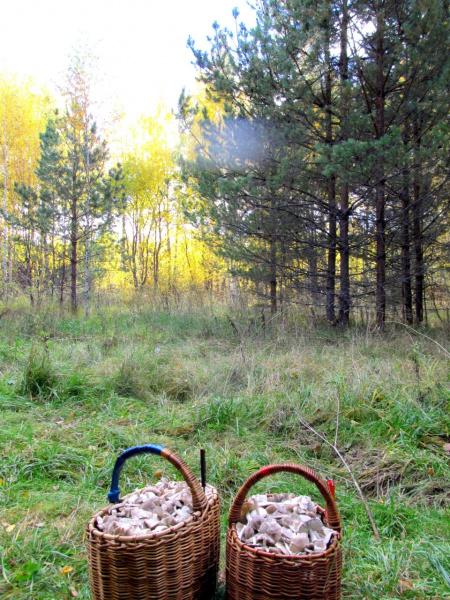 """Осень и """"тихая охота""""."""